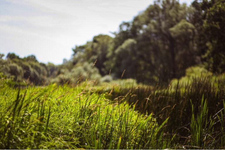Habitat Creation - Greenways Countryside Management