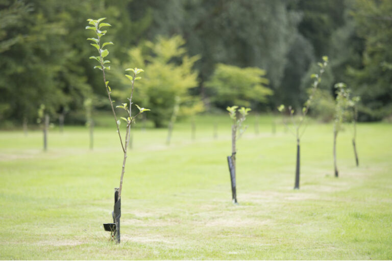 Tree and Hedge Planting - Greenways Countryside Management